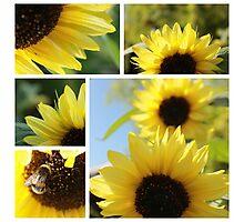 Regent Sunflower 2 Photographic Print