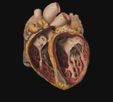 Vintage heart anatomy by kustom