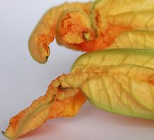 Courgette Flower by rualexa