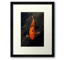 Fish - Big fish little pond  Framed Print