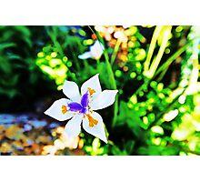 Paula's Flower Photographic Print