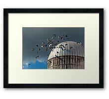 Bird - BIRDS Framed Print