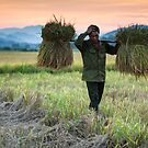 A Long Day in the Fields, Phong Nha, Vietnam (2013) by Zati