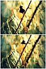 Branch Birdie Collage by tropicalsamuelv