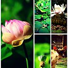 Pamplemousses Garden Collage by tropicalsamuelv
