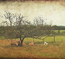 Sheep And Dog Under The Apple Tree by BrookeRyanPhoto