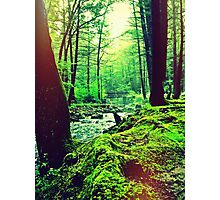 Peoples State Forest Riverton CT Photographic Print