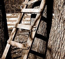 Rustic Ladder by IveyRose