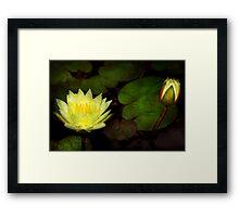 Flower - Lily - Morning showers  Framed Print