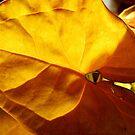 Arum Leaf by WildestArt