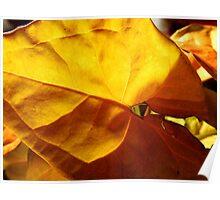 Arum Leaf Poster