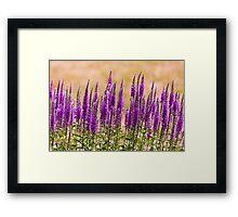 Flower - Speedwell, figwort Family - I dream of lavender  Framed Print