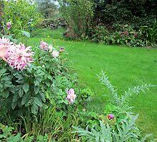 a lovely dahlia by margaret hanks
