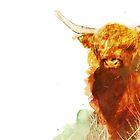 Highland Cow by Alison Keig-Shevlin
