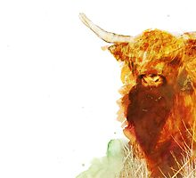 Highland Cow by Illustrated Planet