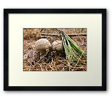 Fungi Hunt Framed Print