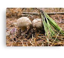 Fungi Hunt Canvas Print