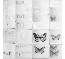 Lepidopterology Photographic Print