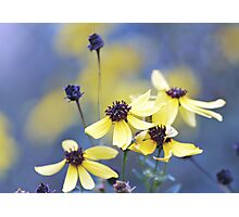 Autumn Flowers Photographic Print