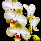 Stair Steps - Beautiful Orchids by Mark Tisdale