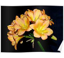 Clivia#4, Blackburn Flower Show, Melbourne, Australia. Poster