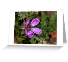 First of the ground wild flowers for the season Greeting Card