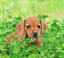 Jersey in the Clover by Karen  Hull