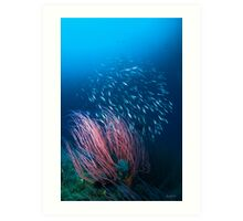 Razorfish & Whip Coral Art Print