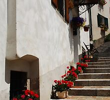 Geraniums on Stepped Street 1 by jojobob