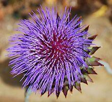 Giant Thistle Flower 4 by jojobob