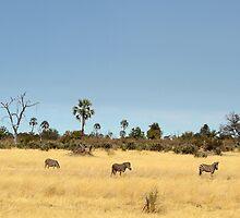 Zebra in the Delta by jozi1