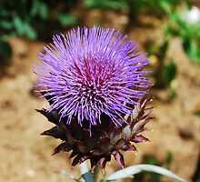Giant Thistle Flower 3 by jojobob