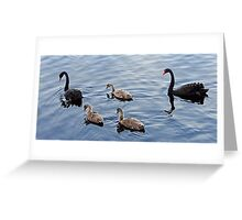 Family of Black Swans Greeting Card