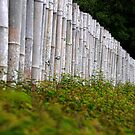 Bamboo Fence by carlosporto