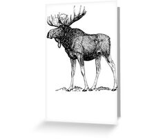 Moose Sketch Greeting Card