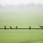 Birds on a Wire (2013) by Zati