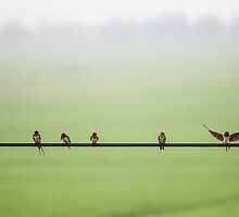 Birds on a Wire (2013) by Zati