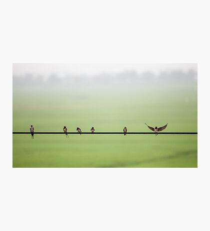 Birds on a Wire (2013) Photographic Print