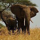 Mother and Child Elephants by mortaloak