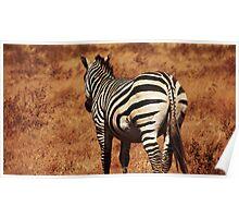 Rear Zebra Poster