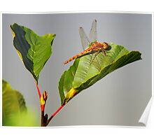 A Dragon on a leaf Poster