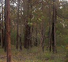 mundaring forest  by Elliot62
