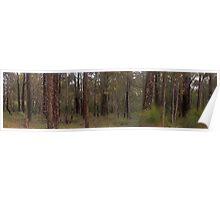 mundaring forest  Poster