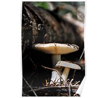 Mushrooms 2 Poster