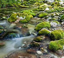 Mountian Creek by LexiTheMonster