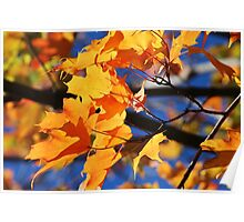 Rainbow of Autumn Colors Poster