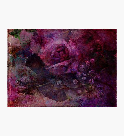 Valley Rose Photographic Print