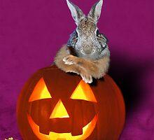 Halloween Party Bunny Rabbit by jkartlife