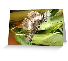 Black and White Butterfly on a Leaf Greeting Card