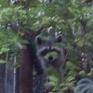 Masked Bandit! by redqueenself